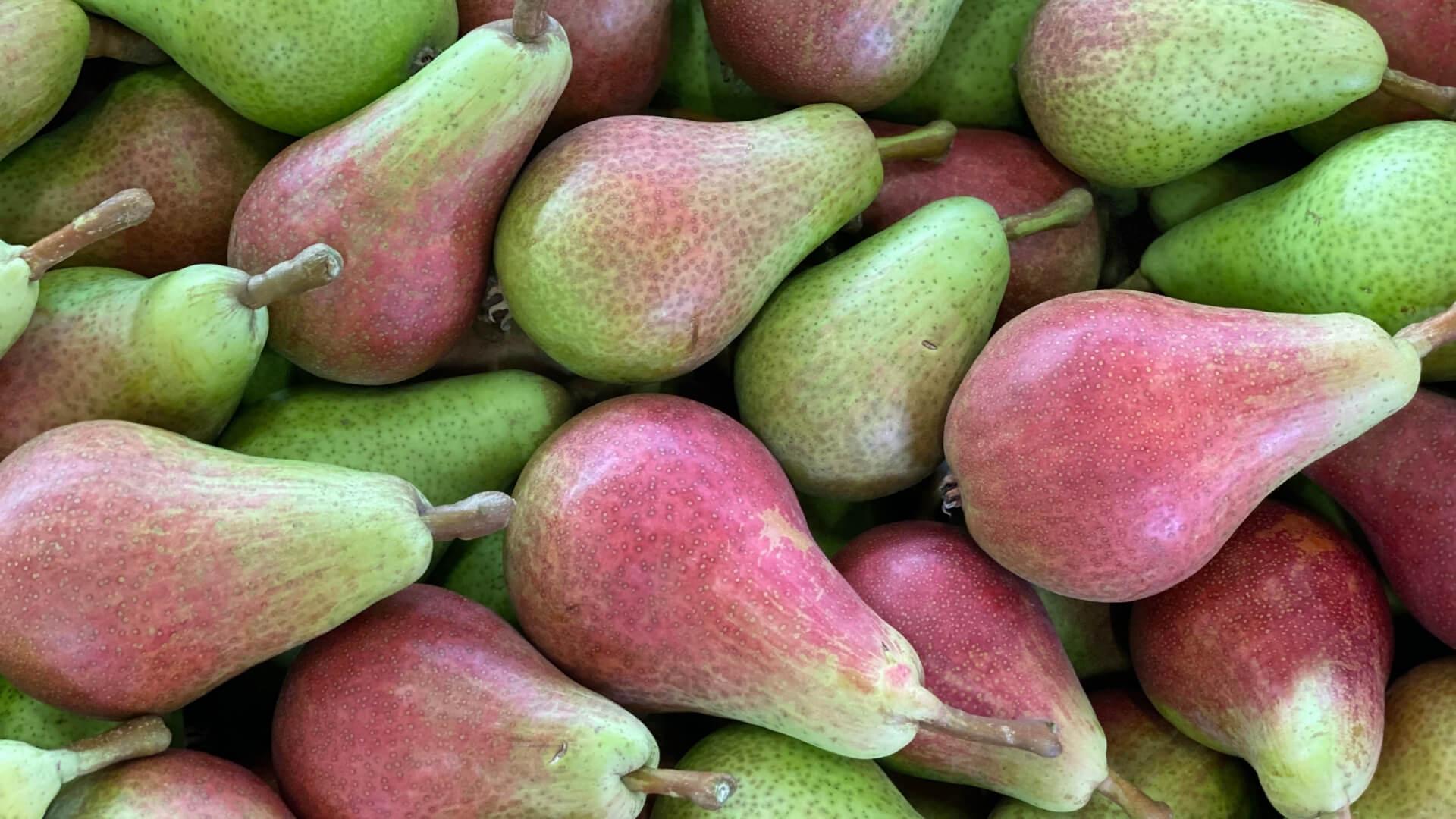 Pera Carmen, la varietà precoce tipica dell'Emilia